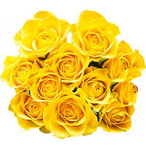 12 Yellow Roses w/o fille